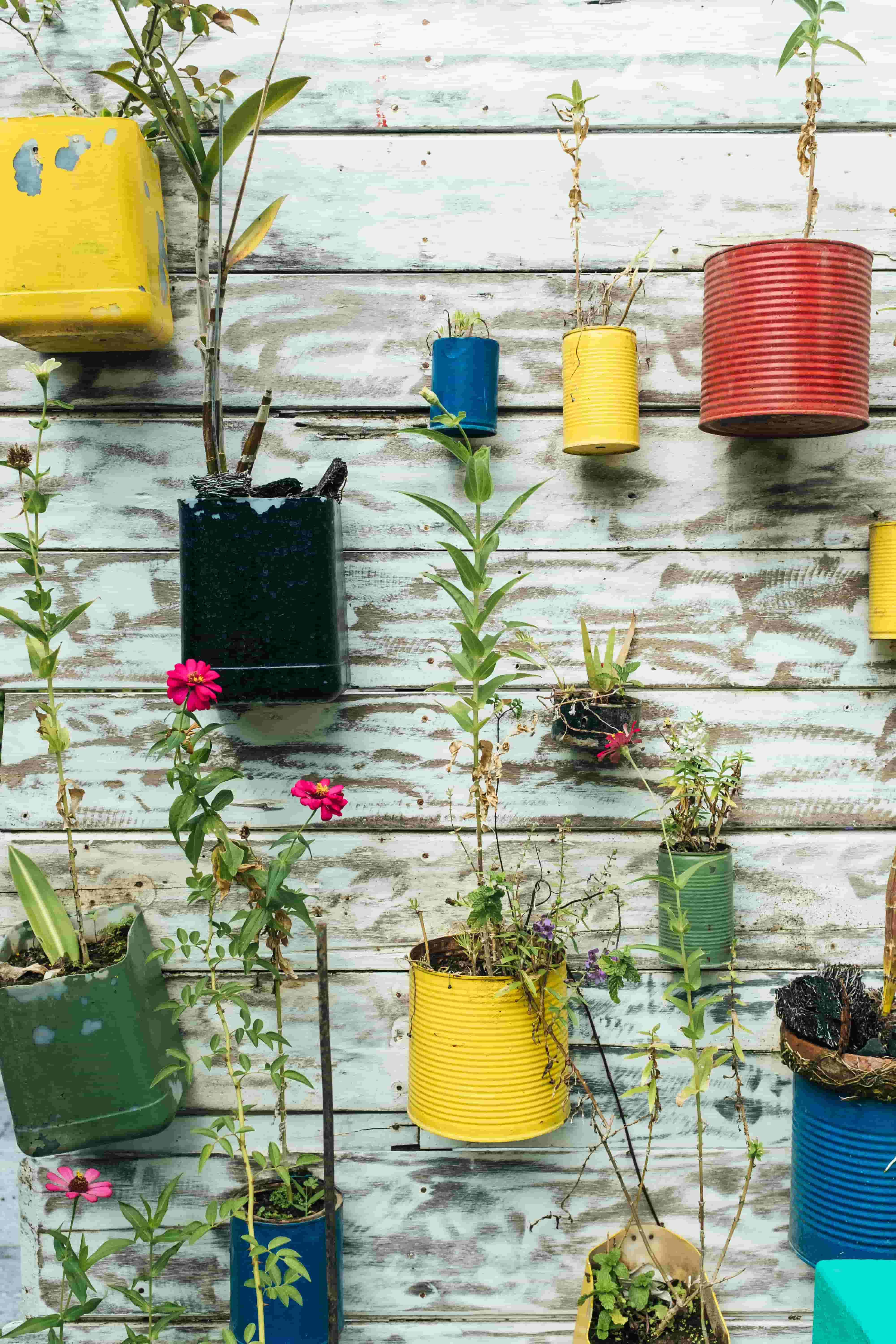 painted tin can planters on a white garden wall