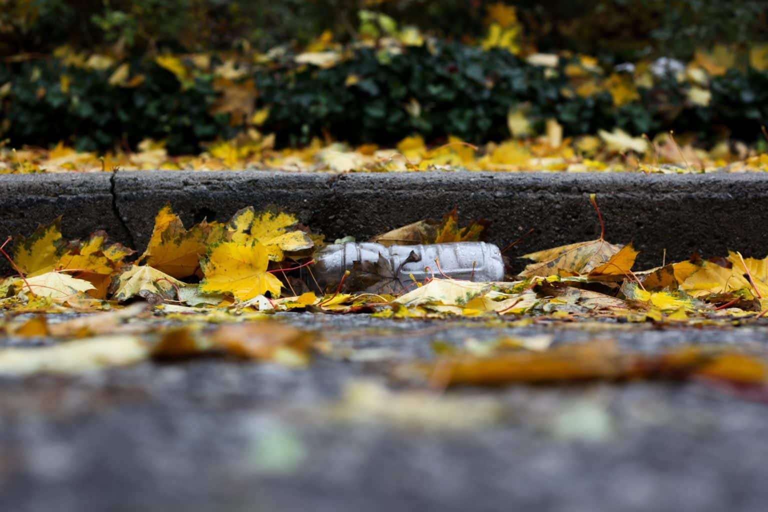 plastic bottle laying in the gutter partially covered with autumn leaves