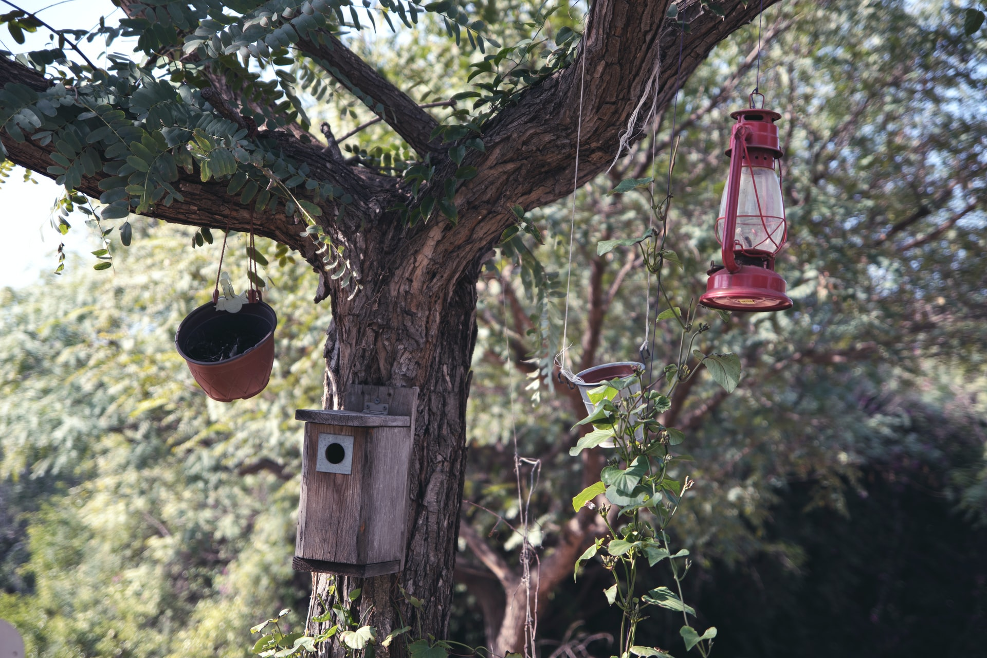 bird feeders and bird house hanging from a tree