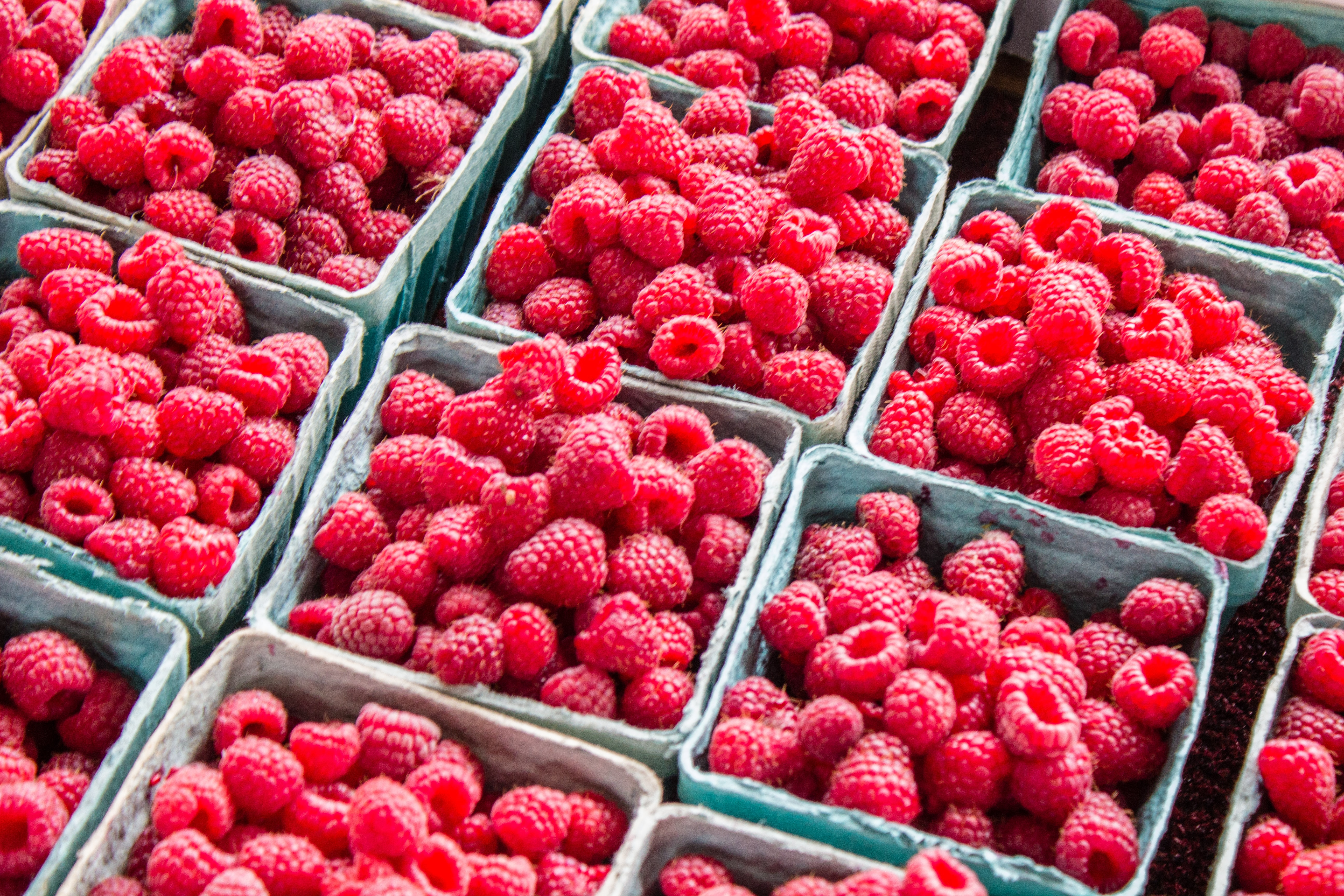 three rows of punnets of raspberries lines up to illustrate what's in season in the UK in July