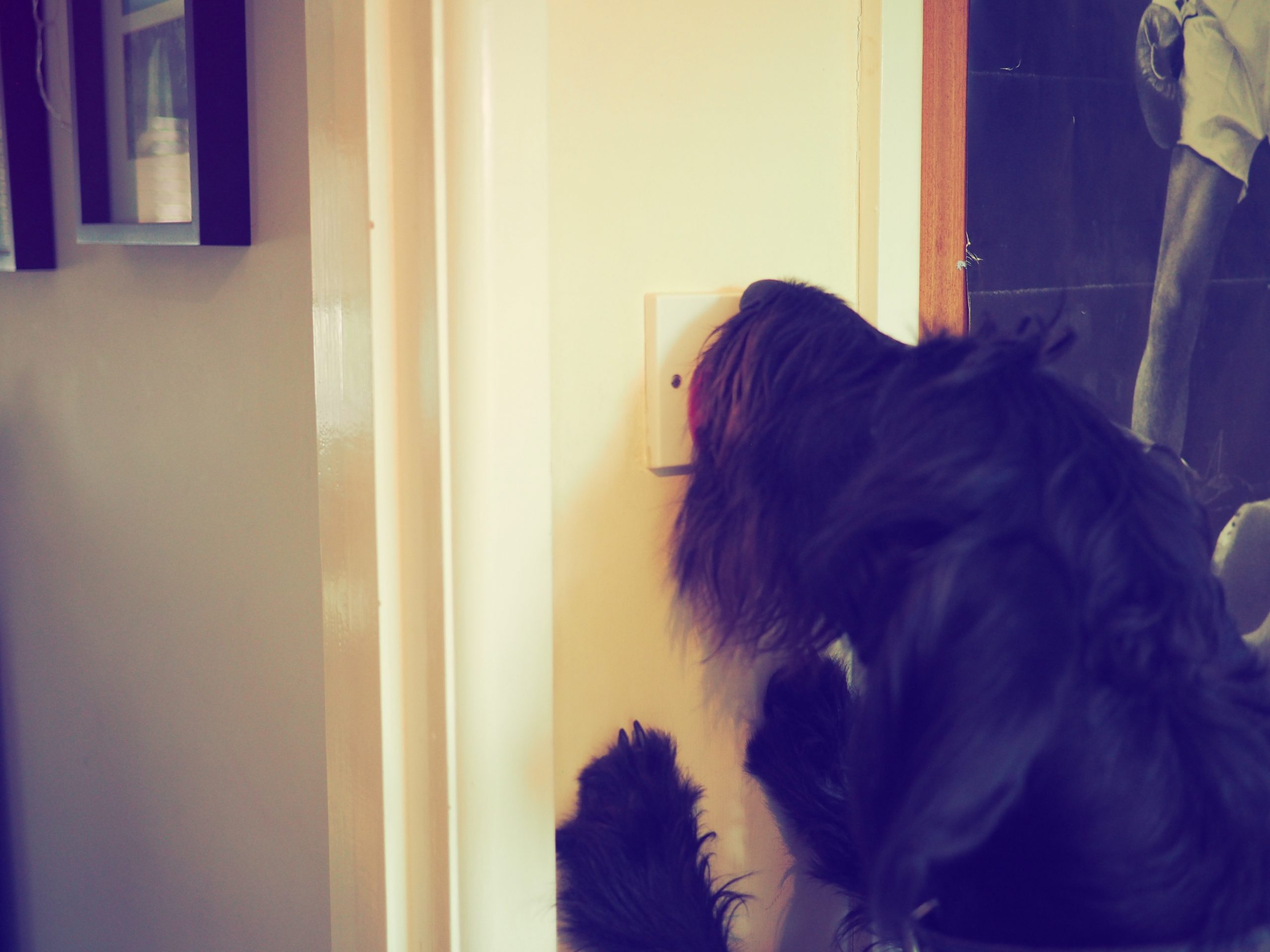 Pablo the dog licking a light switch to turn the lights out