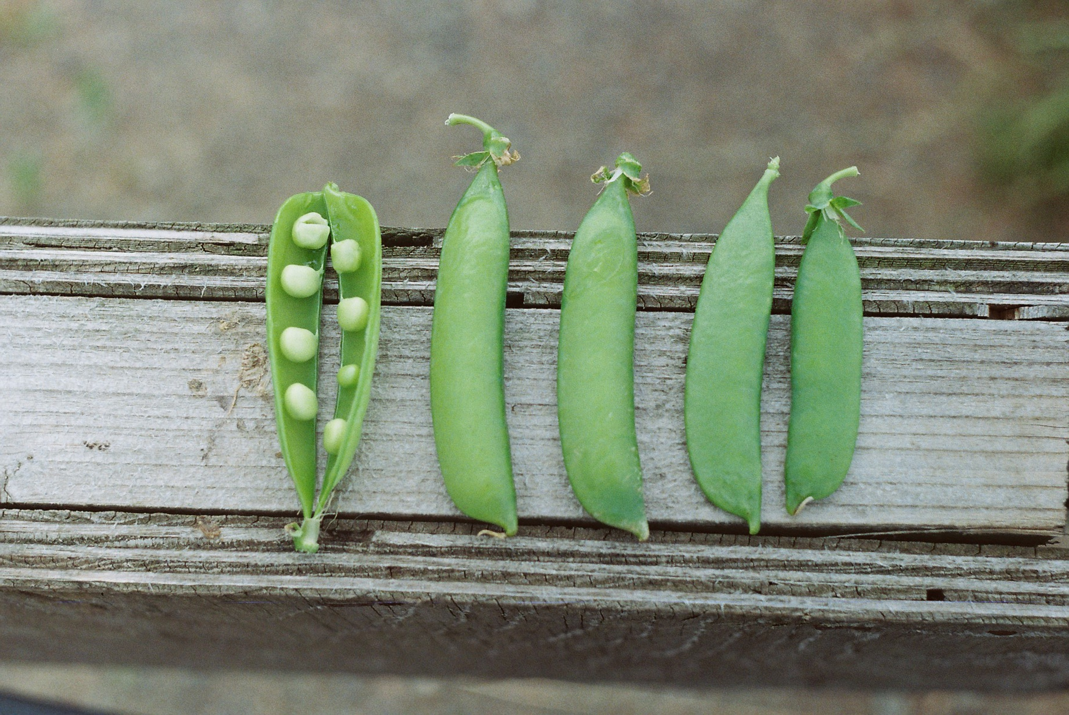 4 pea pods, one split open, on a wooden background