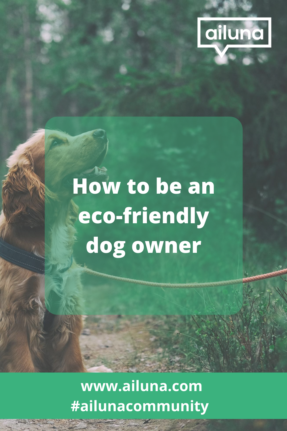 eco-friendly dog owner pinterest pin