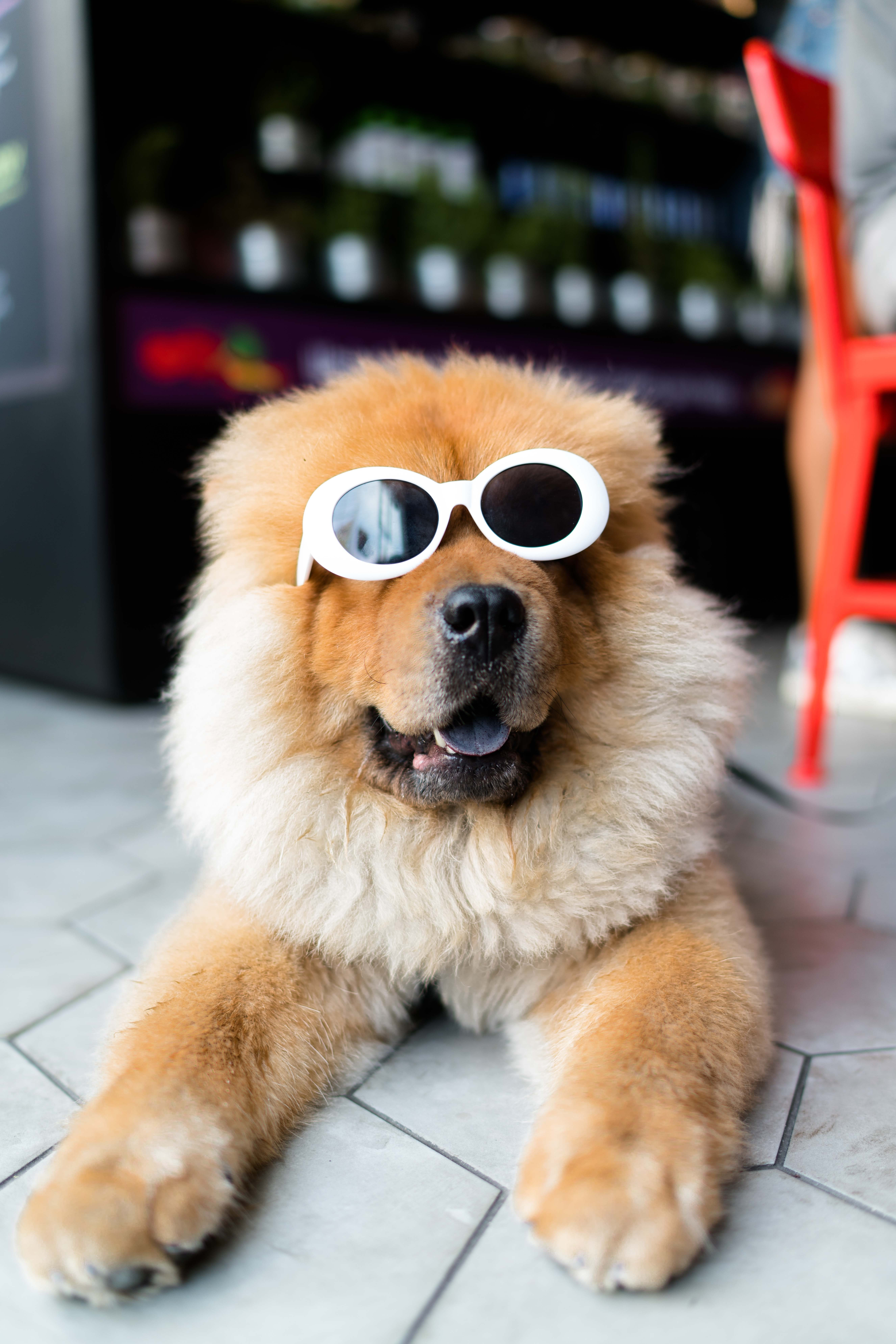 how to be an eco friendly dog owner - dog wearing sunglasses
