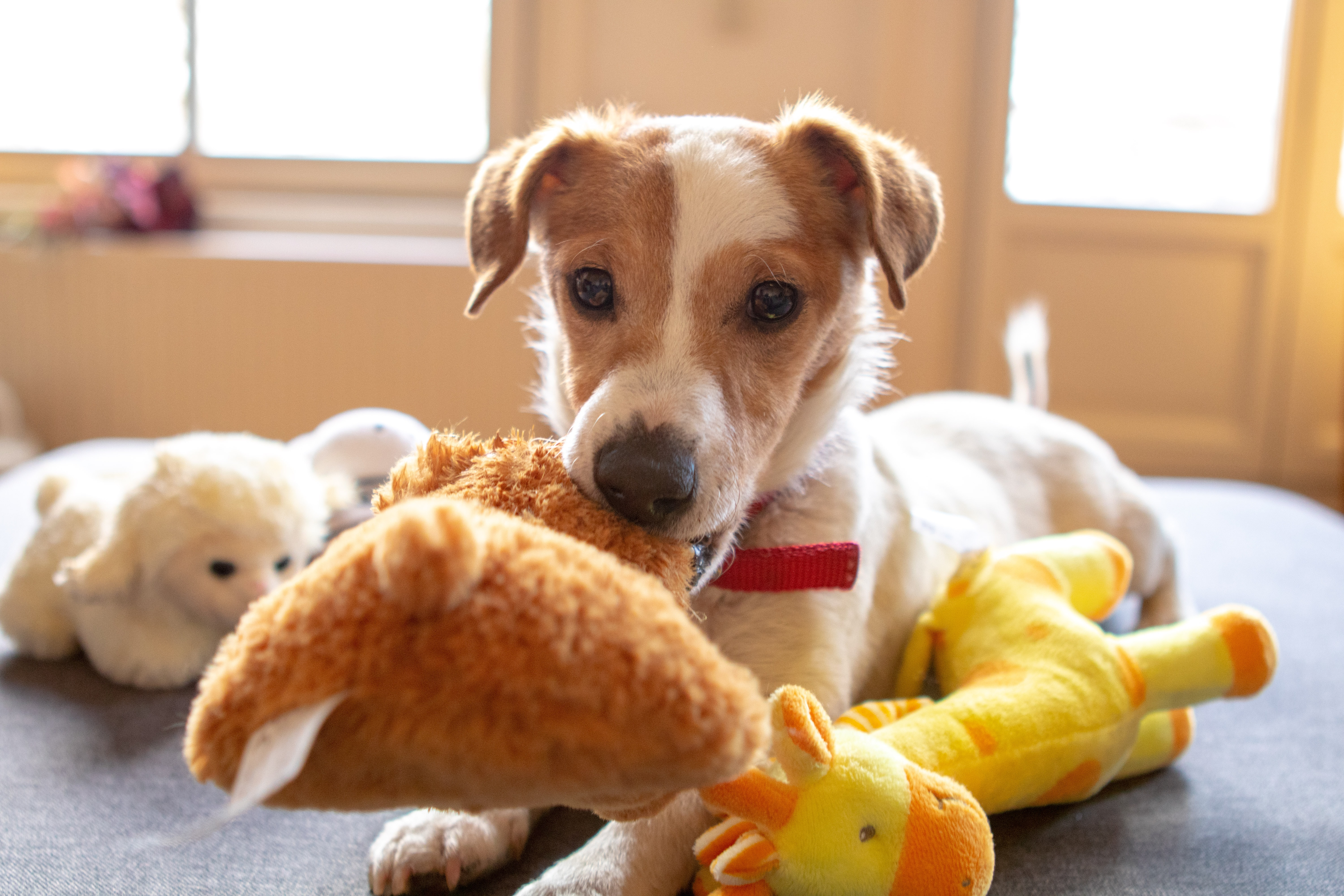 eco-friendly dog toys - dog sitting on bed with lots of soft toys