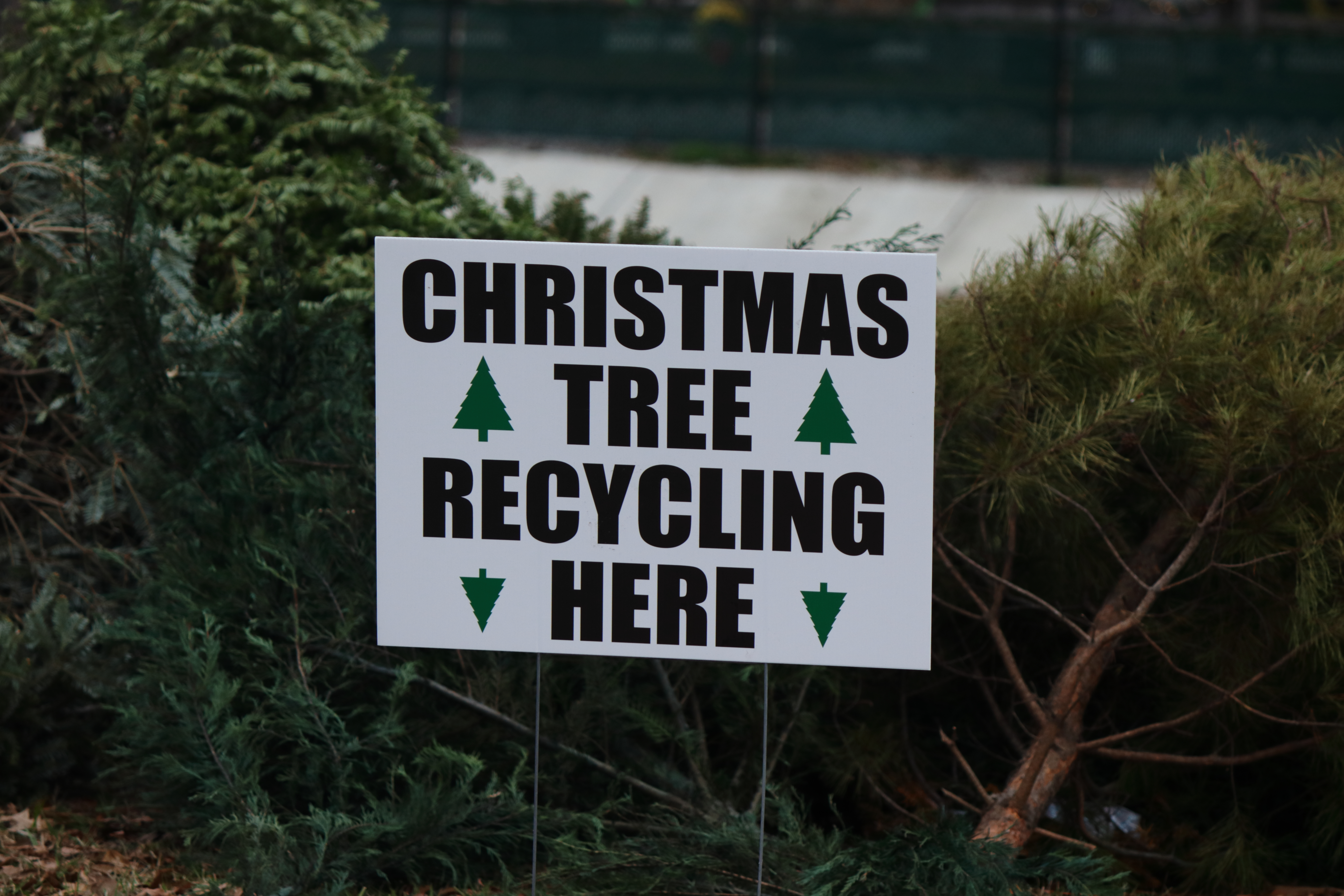 real christmas tree recycling signage