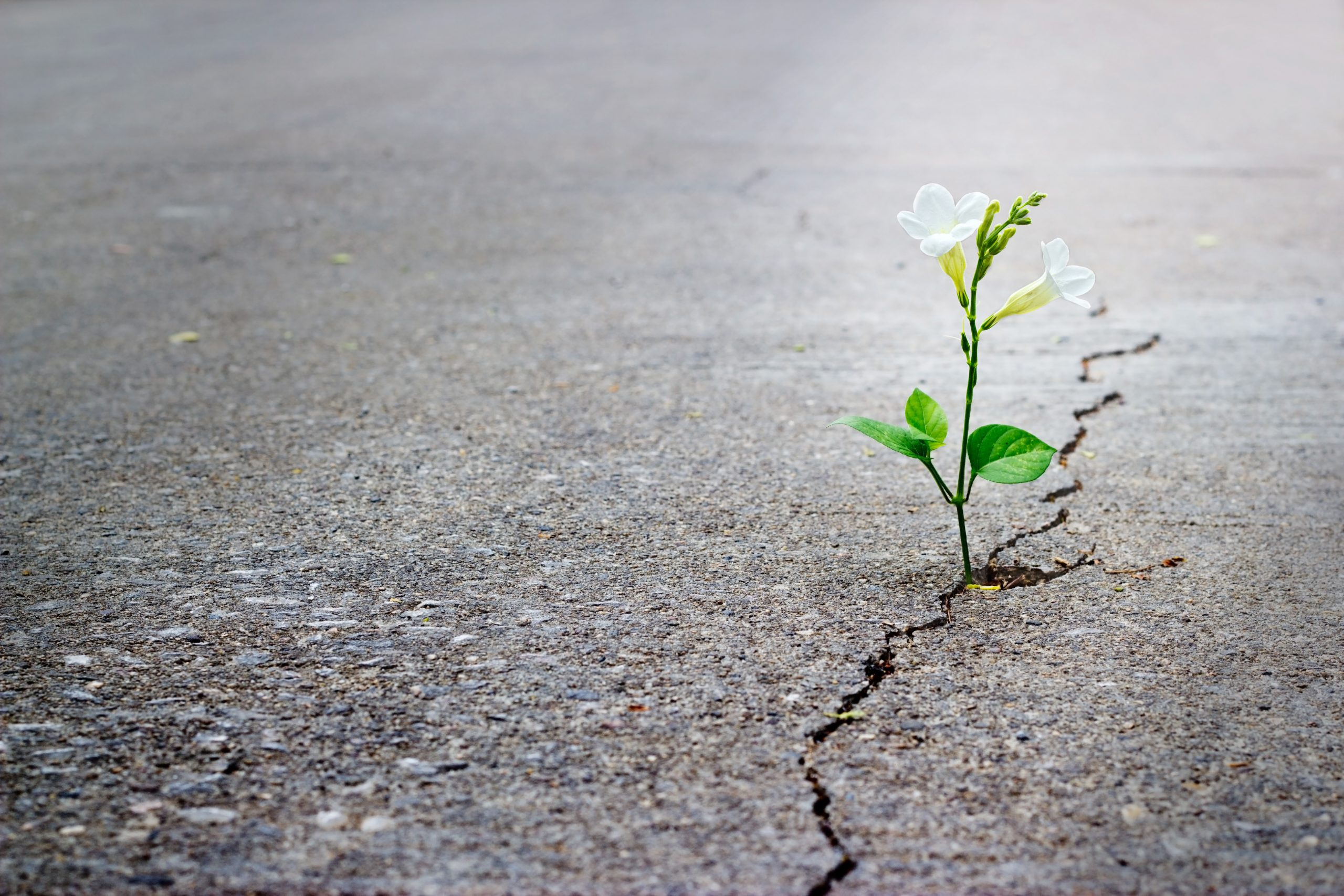 plant growing through a crack in the dry earth to symbolise good news overcoming bad