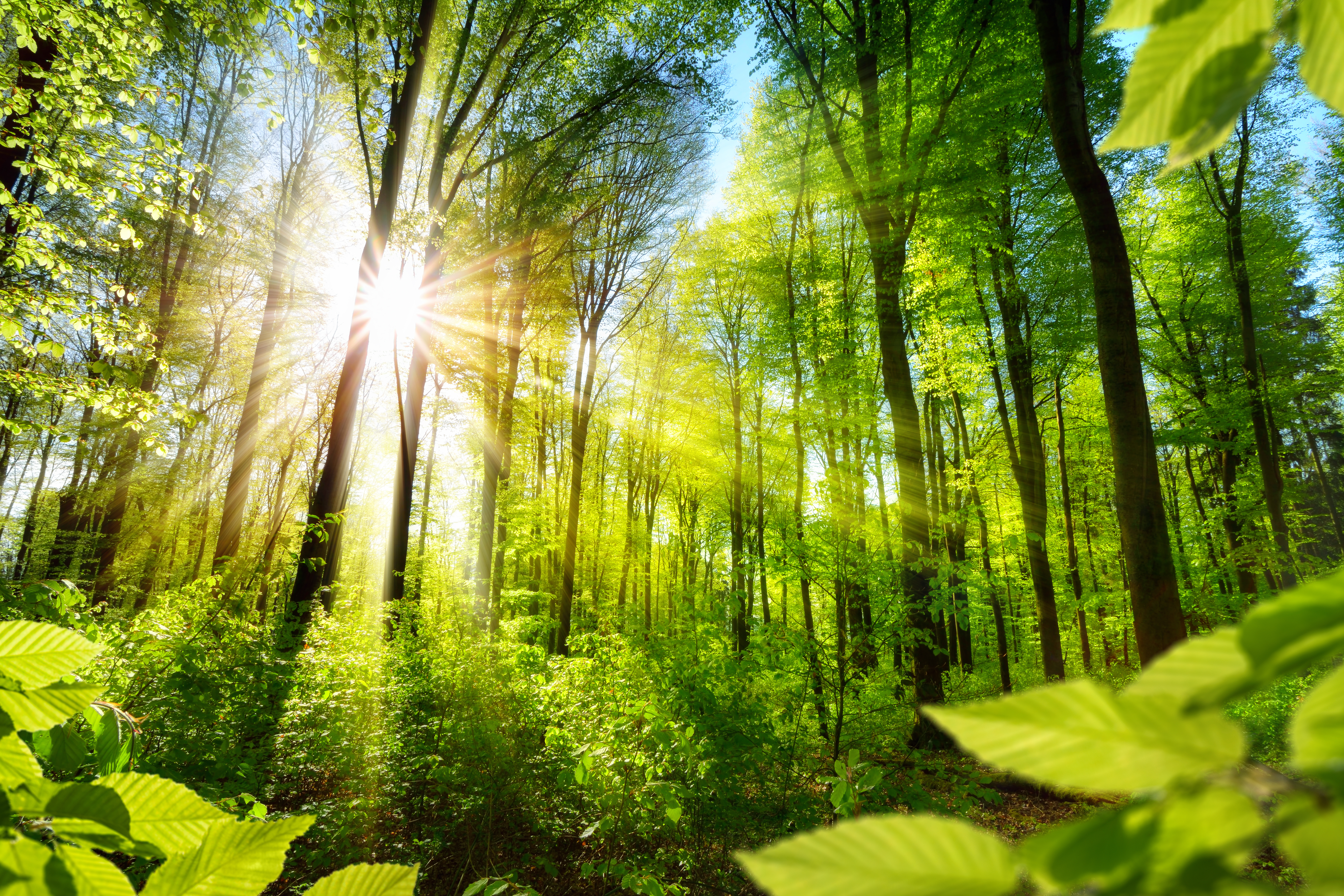 the virtual gift of a forest