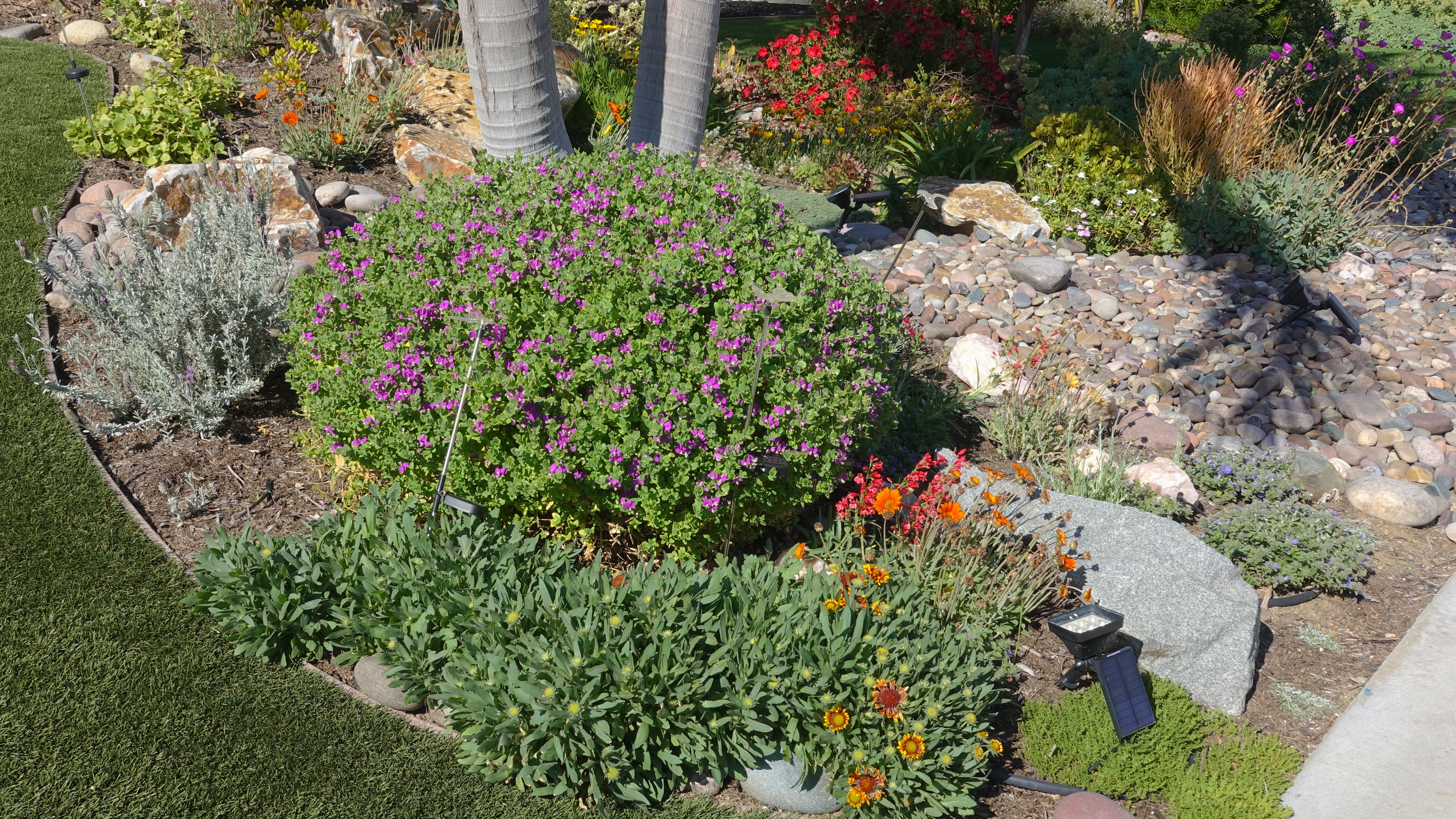 a drought resistant garden can help save energy at home