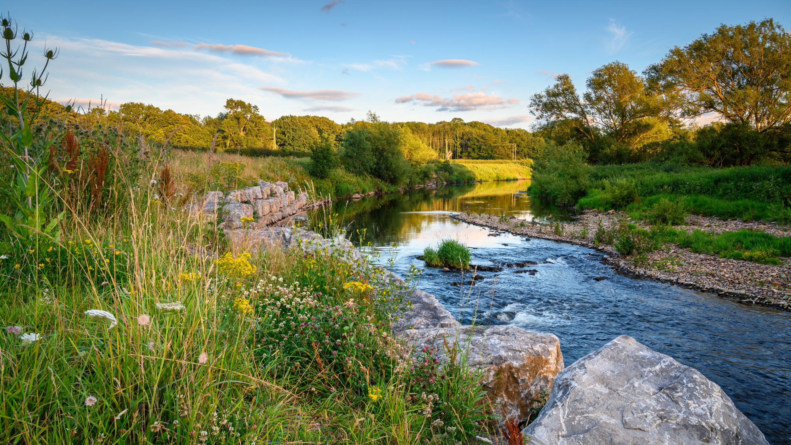 World Rewilding Day - a rewilding project in the NOrth of England including wildflowers and pond
