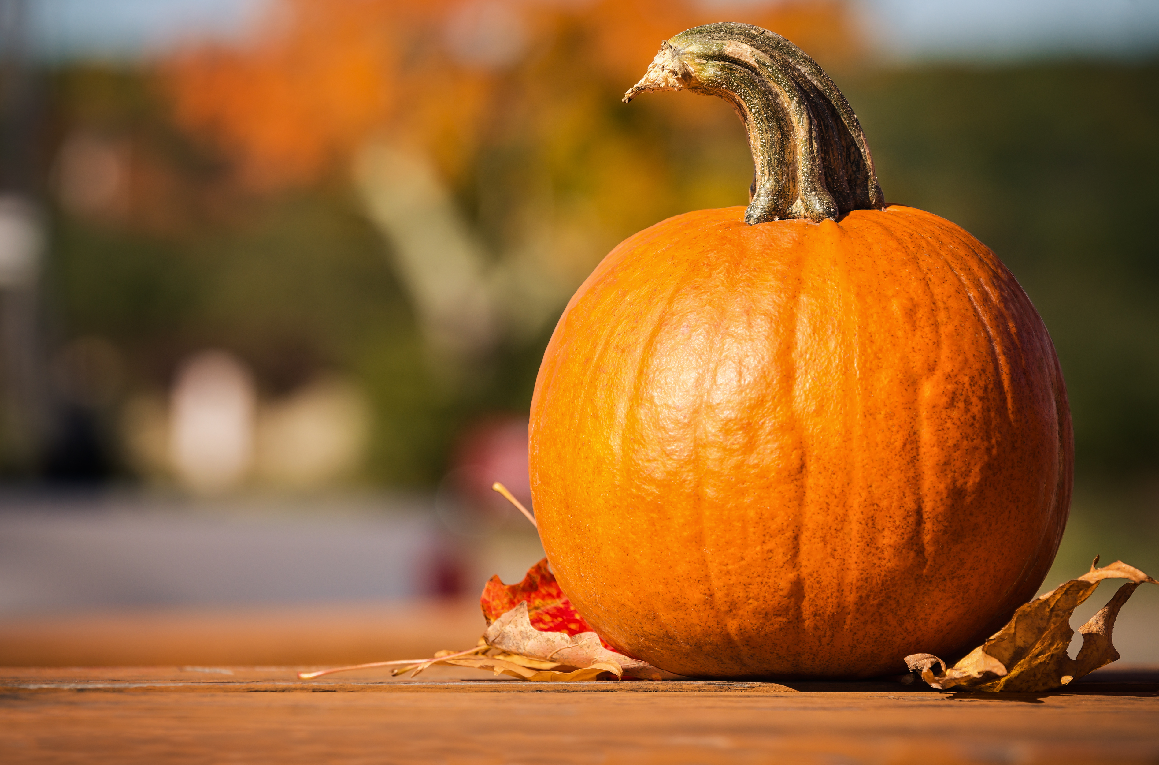 pumpkin recipes for halloween - a pumpkin outside in sunlight on a picnic table